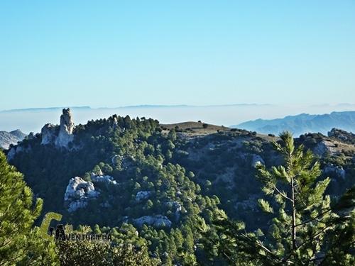 Roca Campanari.