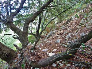 vegetación en la Serrella