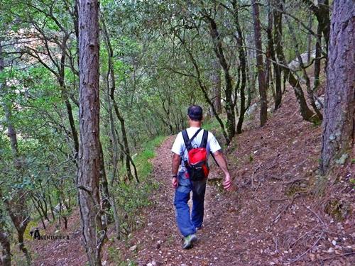 Descendemos por el bosque
