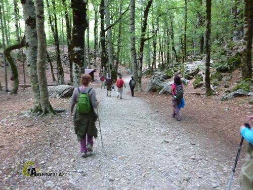 Bosque de hayas en Ordesa