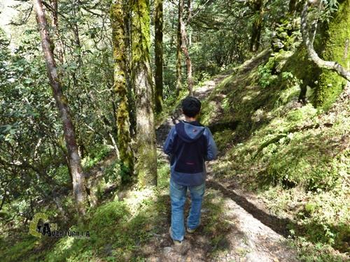 Bosque de rododendros