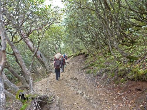 Rododendros en Nepal