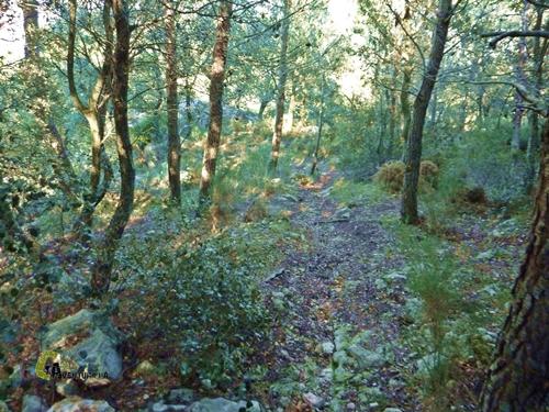 Bosque en Alicante