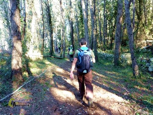Bosque de pinos