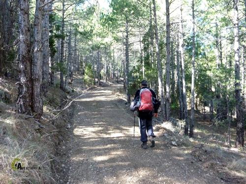 Por pista foresta