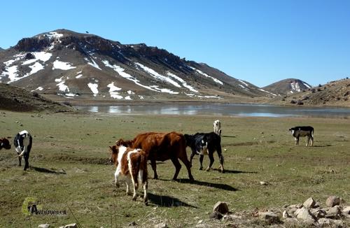 caballos y laguna en el Medio Atlas