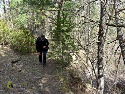 senda entre pinos