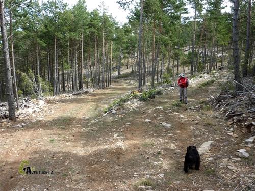 Caminos en la sierra