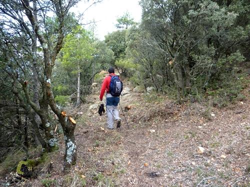 Bosque de carrascas