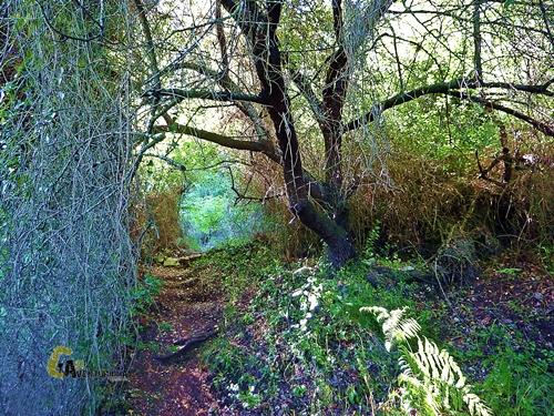 sendero con vegetación