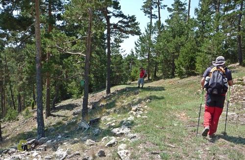 Bosques de pinos