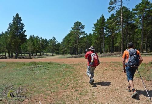 Pista forestal en Teruel