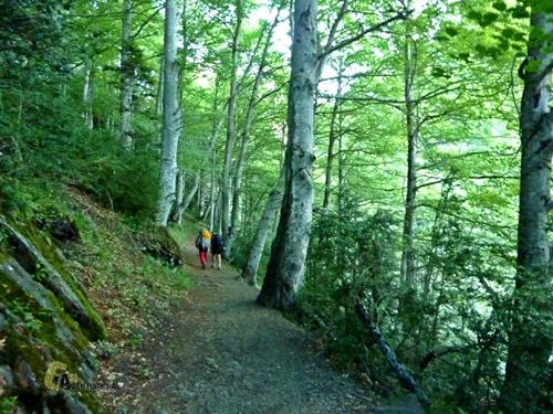 Bosques subiendo al Palas