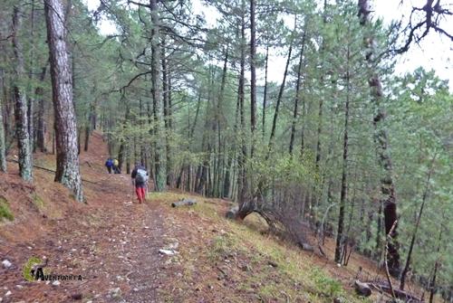 Bosque de Cazorla
