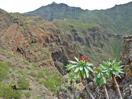 excursiones en Tenerife