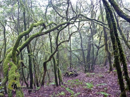 laurisilva de La Gomera