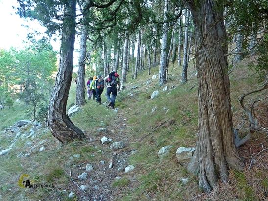 bosques de Castellón