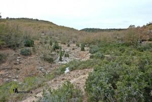 Bosque de quejígos en la sierra de Gudar