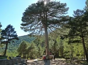 area recreativa Pino del Escobón