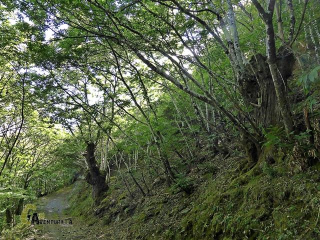 Castaños en Asturias