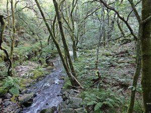 rios de Asturias