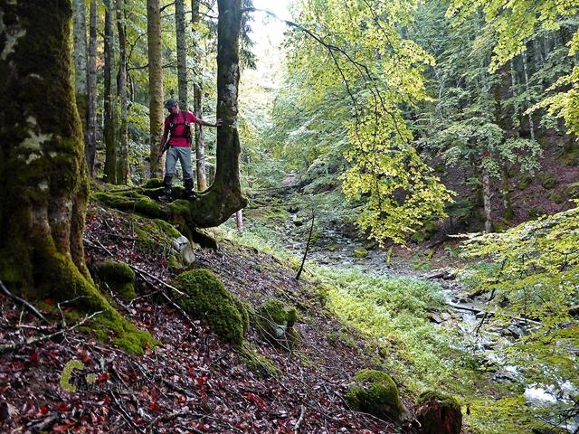 senderismo en la Selva de Irati
