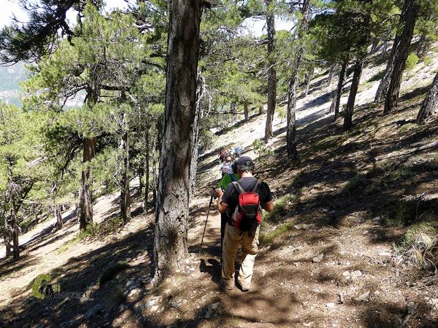 Bajando por el Bosque Vertical