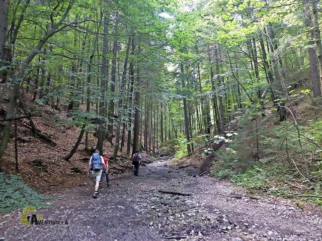 bosque de Eslovaquia