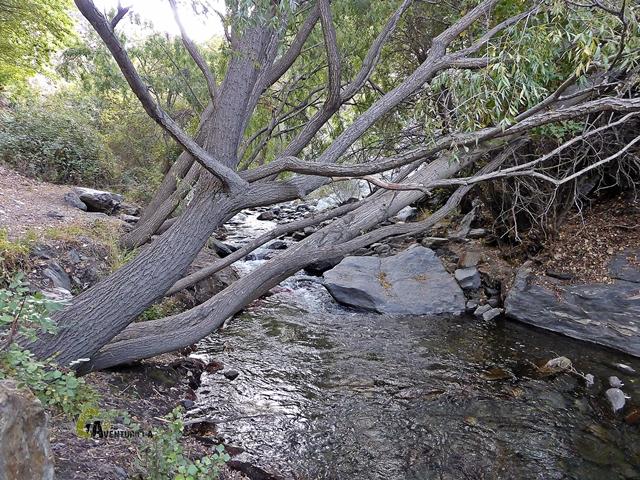 paraje de ribera en el río Genil