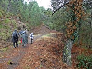 Pistas forestales en la sierra de la Almijara