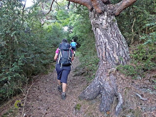 bosque en Panticosa