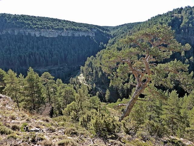 Vistas de los Barrancos de Zoticos y del Quemado