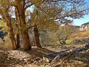 Masias en Teruel