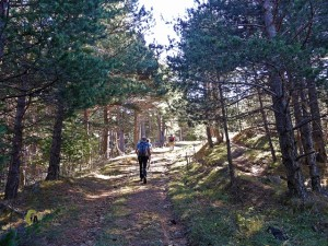 pistas forestales en Fortanete