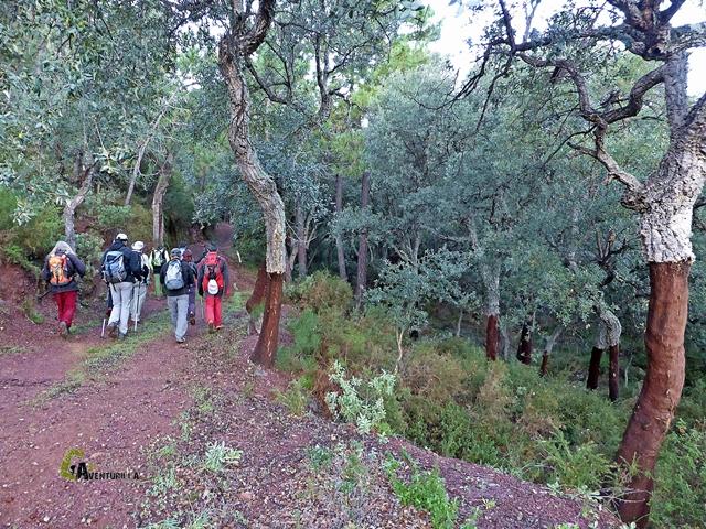 Alcornocal en la sierra de Espadan