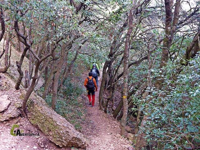 Bosques de Motserrat