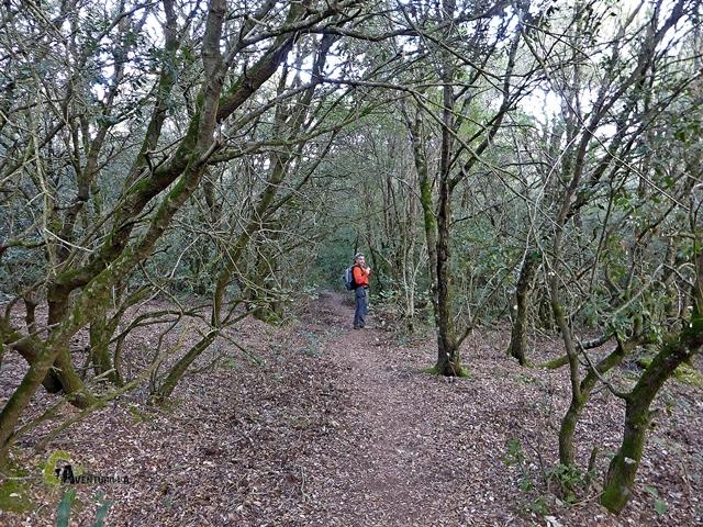 Bosque en la sierra de l'Obac