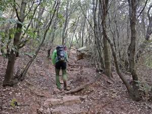 bosques en la sierra de Sant Llorenç del Munt
