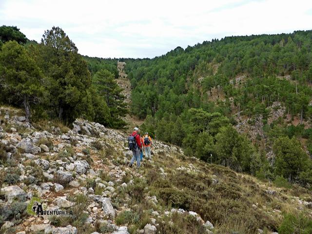 cortafuegos en la sierra de Gudar