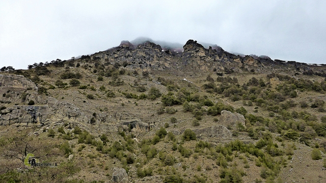 Pico Empanada