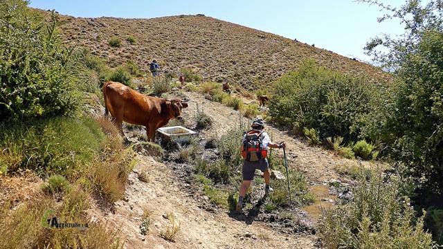 Abrevadero en Sierra Nevada