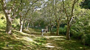 Área recreativa en el valle de Roncal