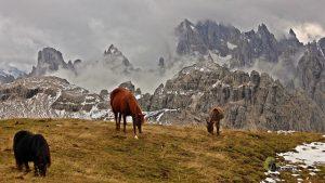 Caballos en Dolomitas