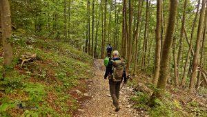 Camino por bosques de Dolomitas