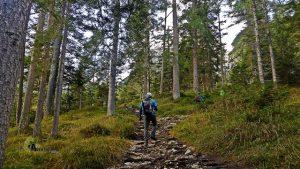 Bosque de Dolomitas