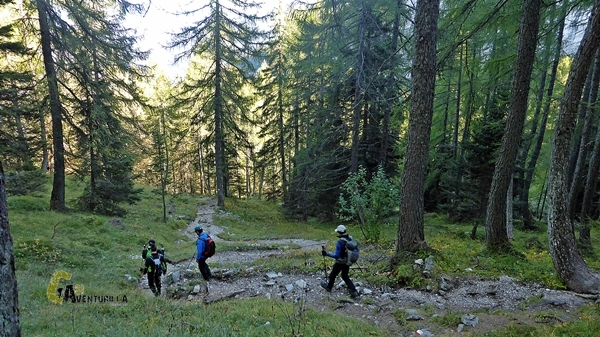 Bosque en Brenta