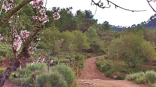 Por pista hacia el castillo de Serra