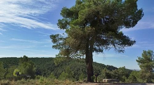 pino carrasco