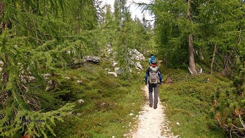 Bosque en Dolomitas