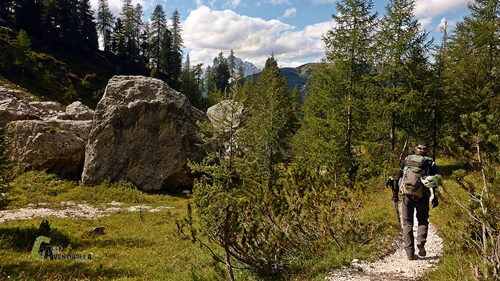 Bosques de Dolomitas